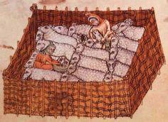 sheep-folds2